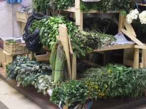 Medicinal plants for sale