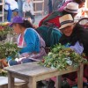 Traditional healers in Cuenca's market